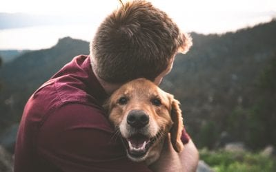 Making provisions for pets in your Will
